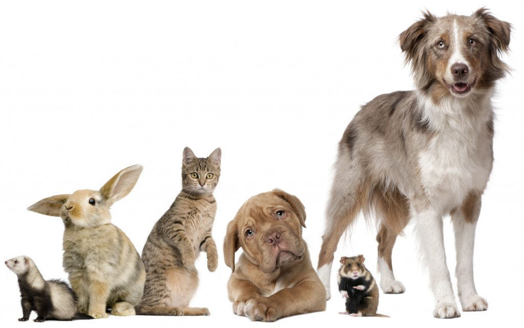 How much do you REALLY love your pet? - Insurance Advice ...