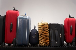 Luggage-web-view-675x450