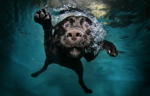 dogs-swimming-pool-1