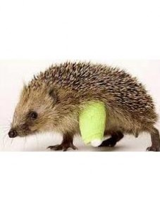 Finding the right pet insurance can be a prickly business!