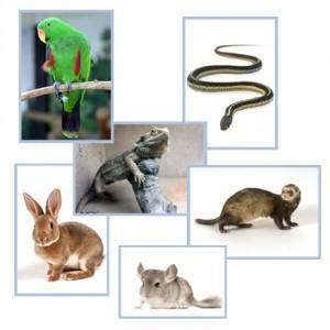 Exotic pet insurance